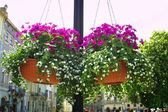 Hanging flowers on a street — Stock Photo