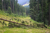 Lyžařské středisko bukovel v létě, karpaty, ukrajina — Stock fotografie