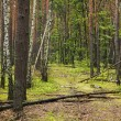 Summer mixed forest - Stock Photo