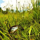 草のサングラス — ストック写真