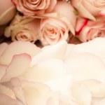 Pink roses petals — Stock Photo