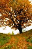 Herfst eiken — Stockfoto