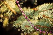 Decored fir-boomtak — Stockfoto