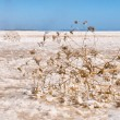Salt lake under blue sky — Stock Photo