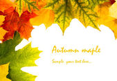 Autumn card of colored leafs — Stock Photo