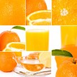 Oranges set — Stock Photo