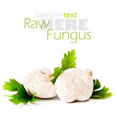 Raw mushrooms — Stock Photo