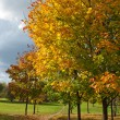Autumn trees in park — Stock Photo