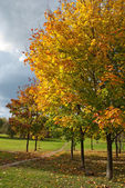 Autumn trees in park — Stock fotografie
