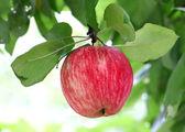 Jasne smaczne jabłka — Zdjęcie stockowe