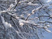Winter branch — Stock Photo