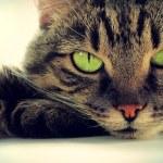 gatto intelligente — Foto Stock