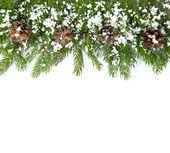 Marco de navidad con nieve y conos — Foto de Stock