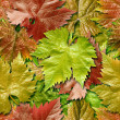 Foto Stock: Vine leafage seamless background.