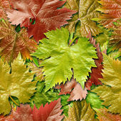 Vine leafage seamless background. — Photo
