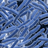 Bacteria. — Stock Photo