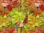листья винограда. — Стоковое фото