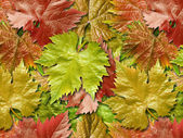 Vine leafage. — Stock Photo