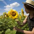 Walk in a sunflower field — Stock Photo #7561600