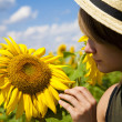 Stock Photo: Walk in a sunflower field
