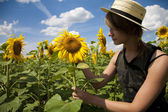 Walk in a sunflower field — Stock Photo