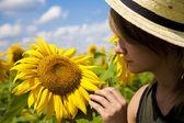 Walk in a sunflower field — Stock Photo