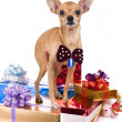 Stock Photo: Dog with presents