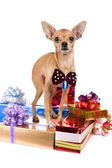 Dog with presents — Stock Photo