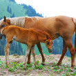 Horse and foal - Stock Photo