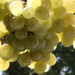 Stock Photo: Green Grape on sun