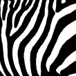 Zebra as pattern — Stock Photo #7625733