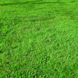 Turf  green lawn — Stock Photo