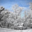 Park landscape in winter — Stock Photo