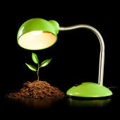 Young sprout and table lamp — Stock Photo