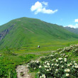 Caucasus mountains — Stock Photo #7445679
