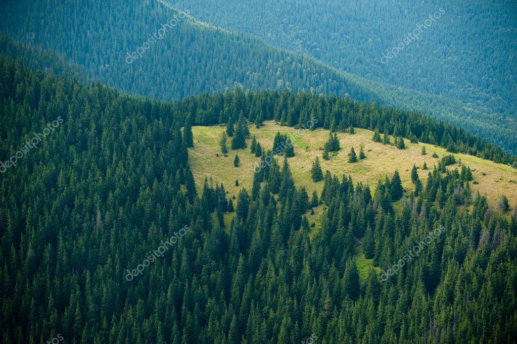 Evergreen forest and mountain slopes — Stock Photo #6986593