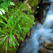 Flowing Water in mountain stream — Stock Photo