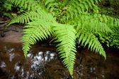 Wet forest vegetation — Stock Photo