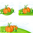 Growing pumpkins on the field — Stock Vector