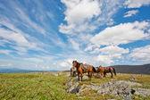 Harnessed atlara karşı dağlar — Stok fotoğraf