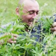 Man with glasses in the bush of hemp. - Stockfoto