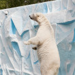 Polar bear in a zoo — 图库照片