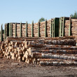 Commodity cars transporting wood stand in warehouse — Stock Photo #7010330