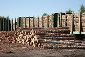 Commodity cars transporting wood stand in a warehouse — Stock Photo