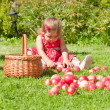 Little girl collects the apples — Stock Photo #7165472