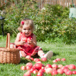 Little girl collects the apples — Stock Photo