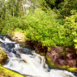Beautiful landscape with wood and a falls — Stock Photo #7250011