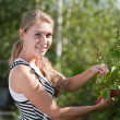 Young woman cuts off branches of a berry bush - Stock Photo