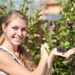 Stock Photo: Happy womshowing yield of Aronia