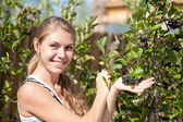 Happy woman showing a yield of Aronia — Stock Photo